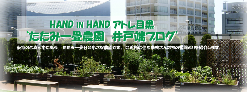 HAND IN HANDアトレ目黒'たたみ一畳農園 井戸端ブログ'